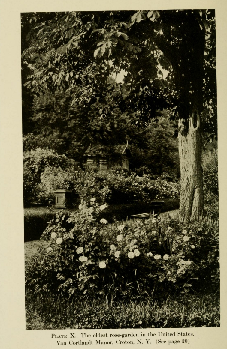 The Illustrated Plant Nut: Oldest Rose Garden in the United States?