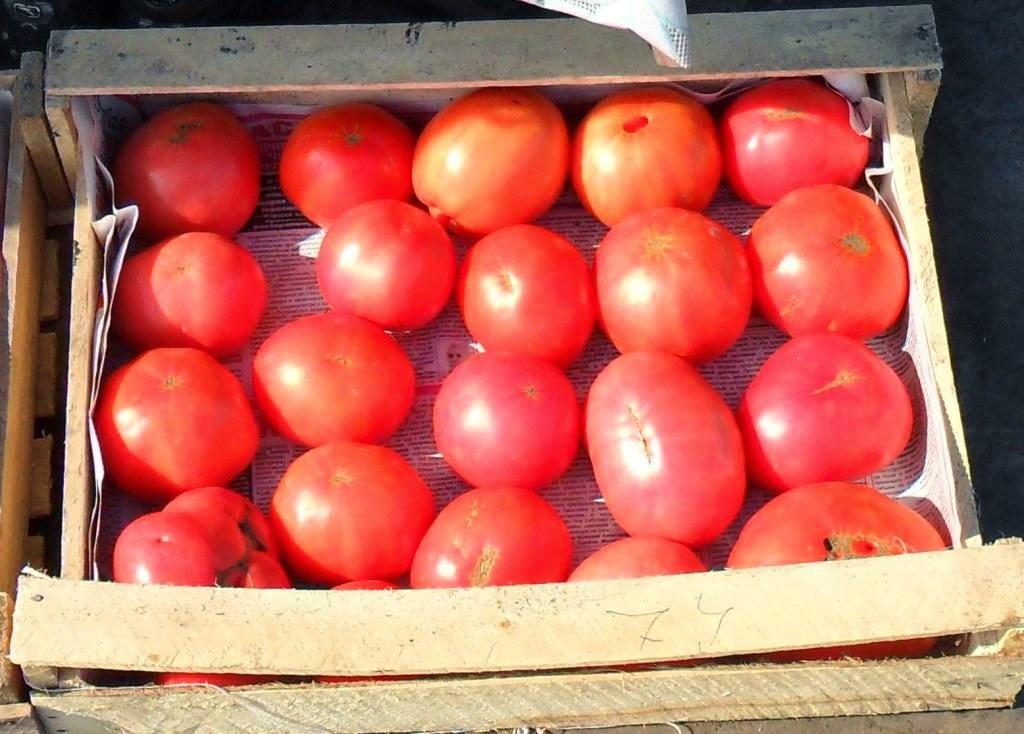Индетерминантные помидорки поспевают