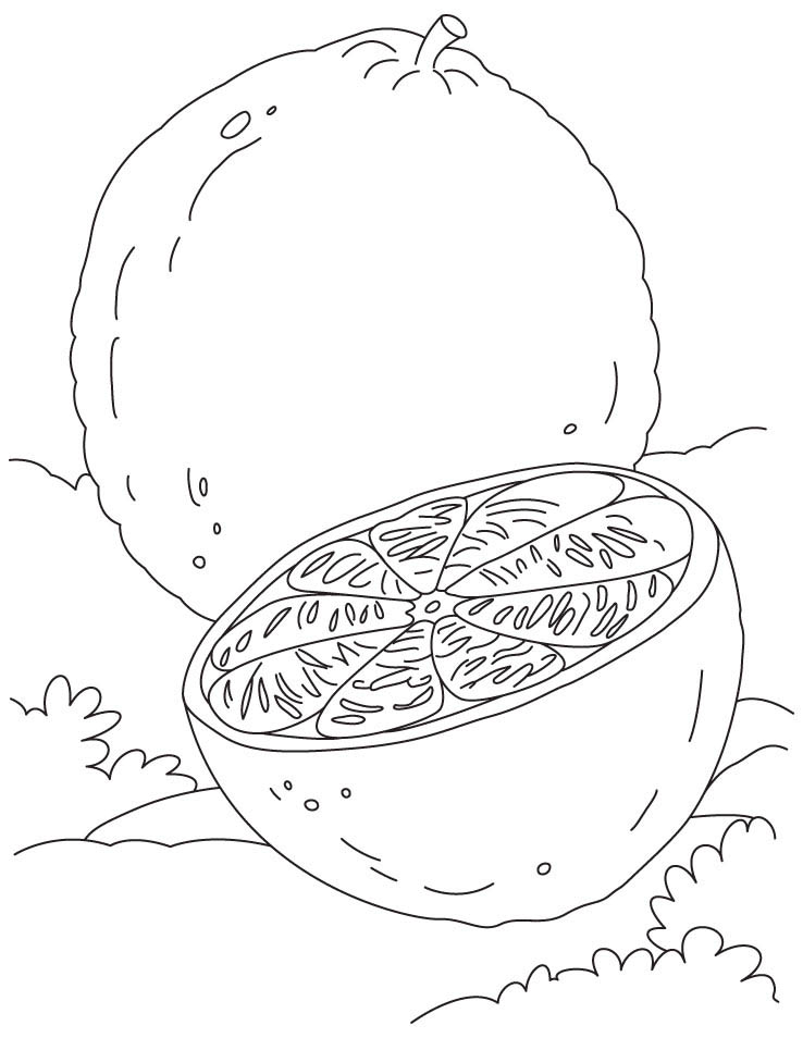 coloring pages orange - photo#34