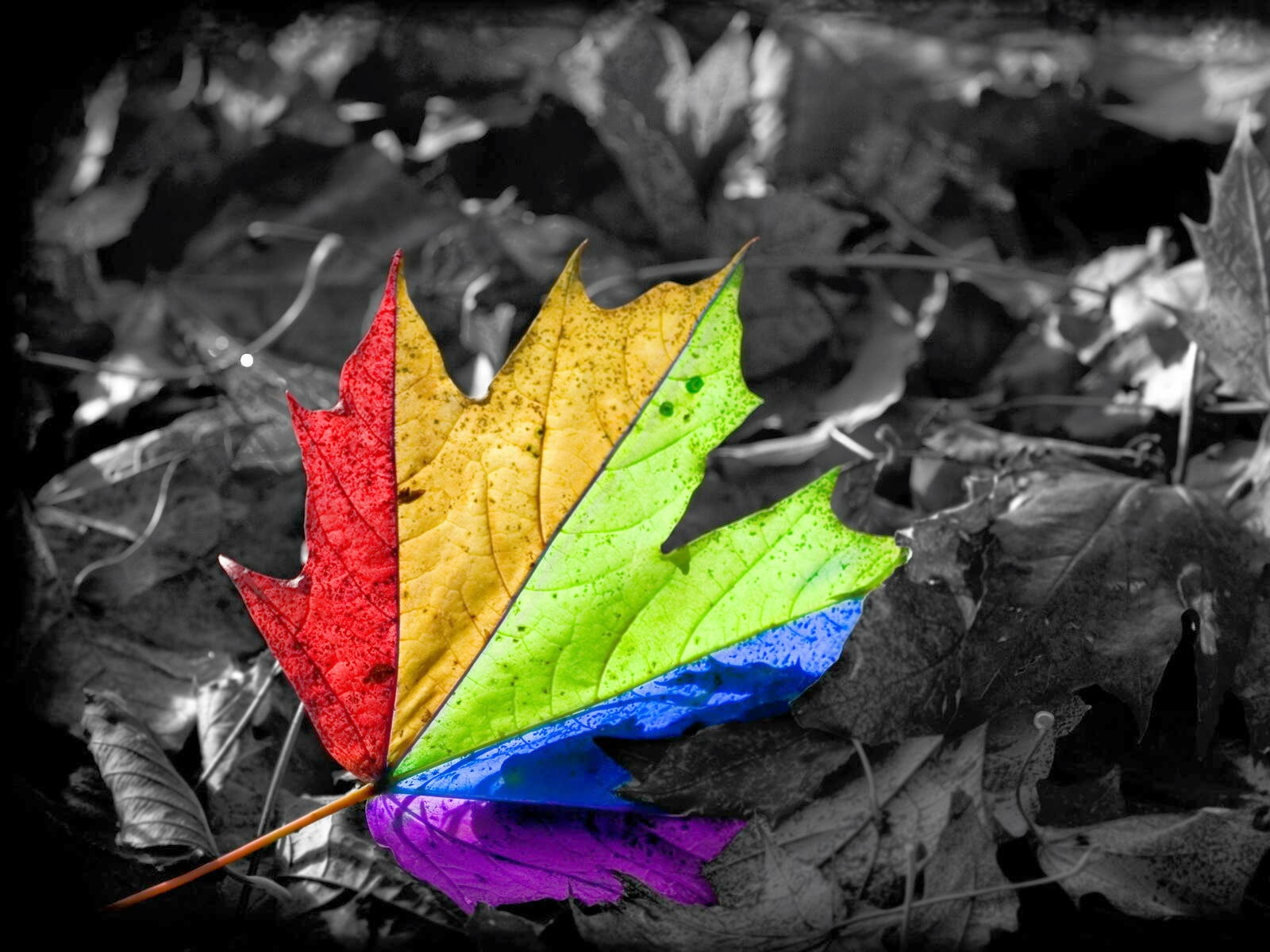 WOW Colorful Leaf Wallpapers