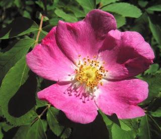 Essay on flower essences