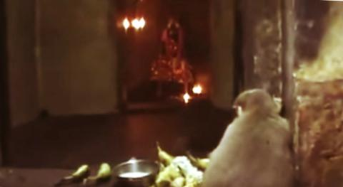 Devotees of a Shiva temple at Nagapattinam district, Tamil Nadu, were recently stunned to see a monkey sitting and crying in front of the deity.