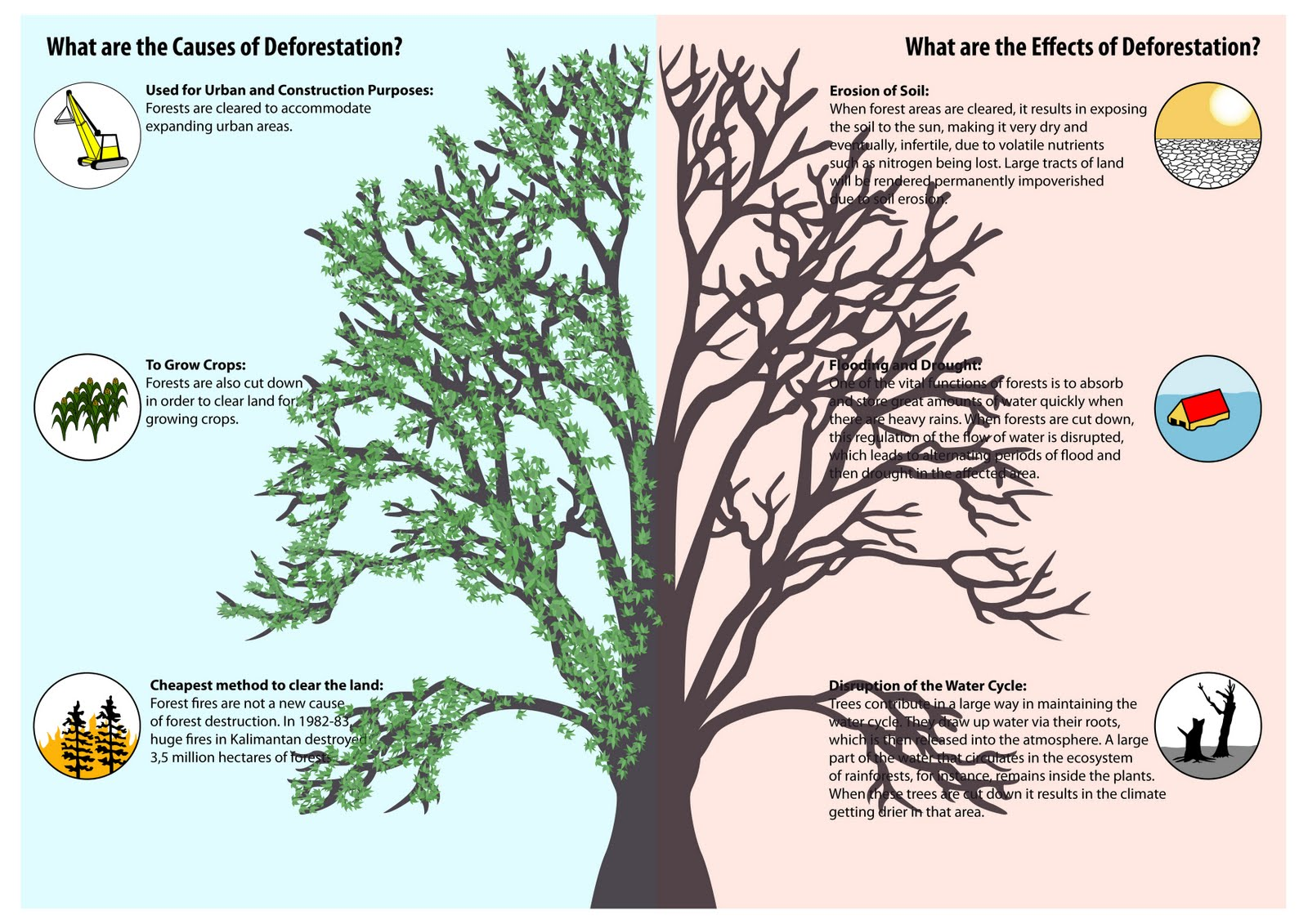 "impacts of deforestation and desertification on indigenous people essay Indigenous people and communities in canada  this will have devastating impacts for ""indigenous communities  this article was an original essay published in."