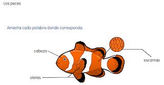http://primerodecarlos.com/SEGUNDO_PRIMARIA/SANTILLANA/Libro_Media_Santillana_c_del_medio_segundo/data/ES/RECURSOS/actividades/05/04/010504.swf