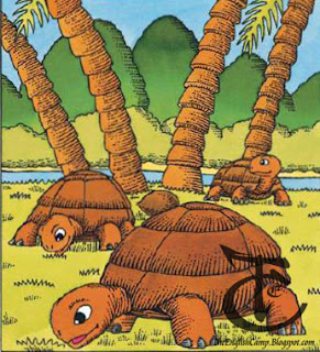 tortoise's shell