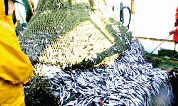 """Pescadores: Las tensiones en el caladero marroquí han """"empeorado"""""""