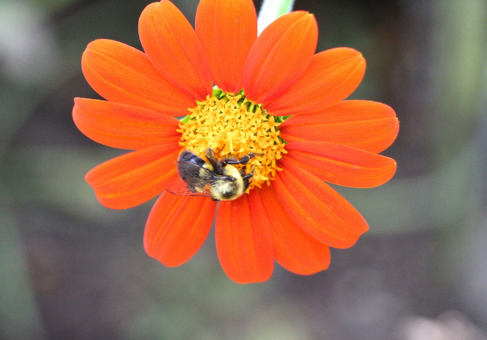 My Life in Gardens: For the love of Sun and Bees