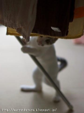 洗濯物泥棒猫