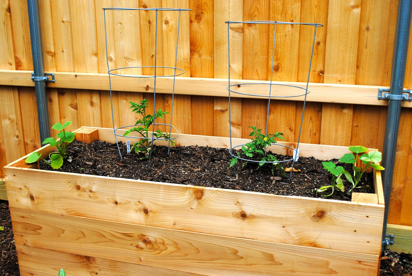 how to start a veggie garden