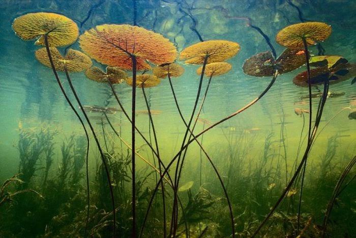 PLANTAS Plantas acuáticas