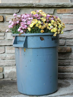 Chrysanthemums in garbage can by garden muses-not another Toronto gardening blog