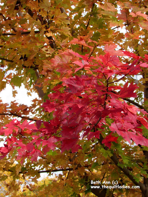 In the Park Fall Photo's by Beth Ann Strub