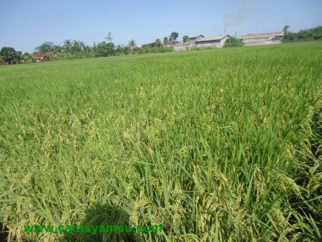 Perswahan Wilayah Sempor, Gombong