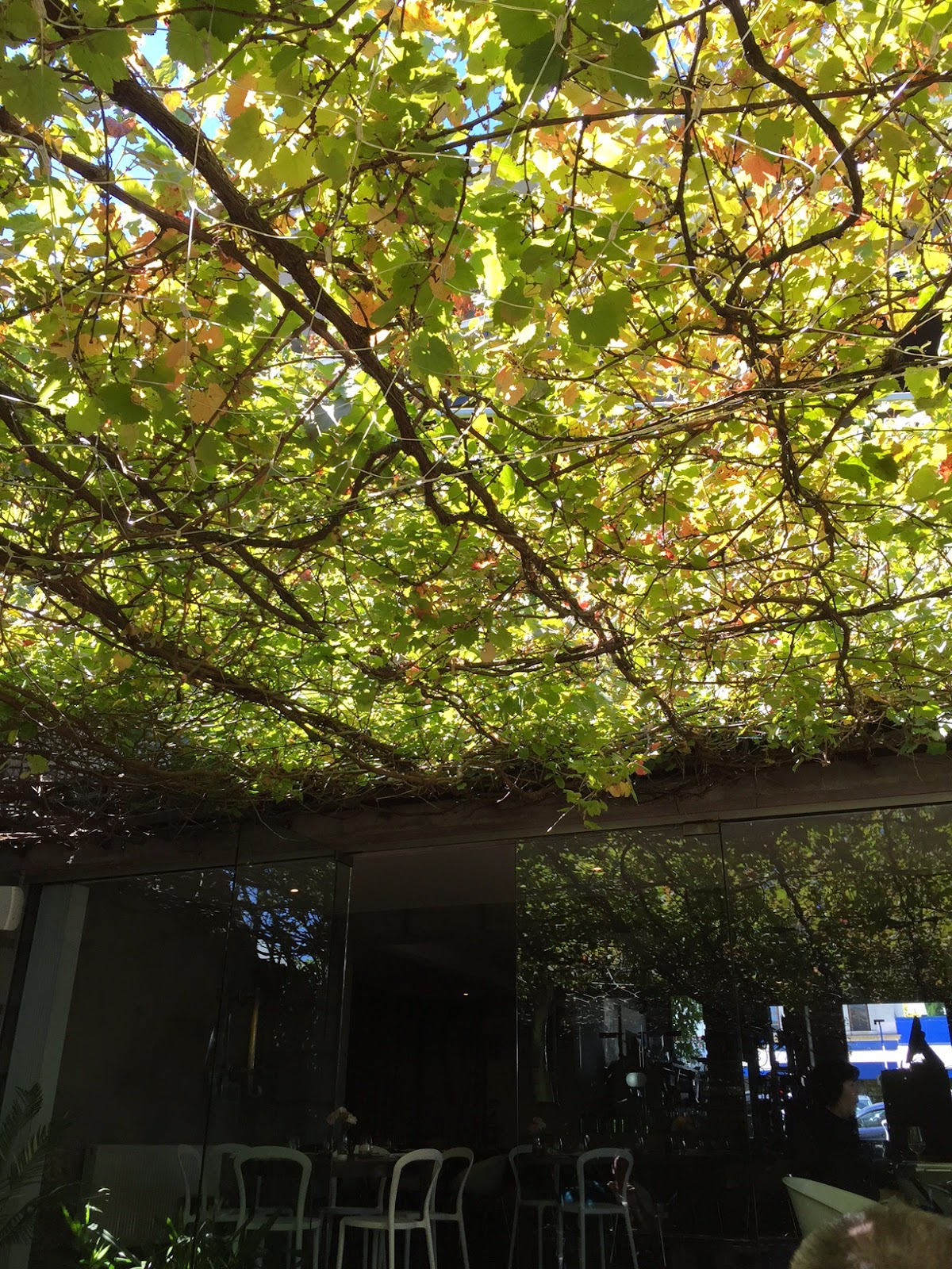 Lovely Cool Leafy Courtyard