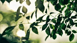 Brances Leaves Sun Rays HD Wallpaper