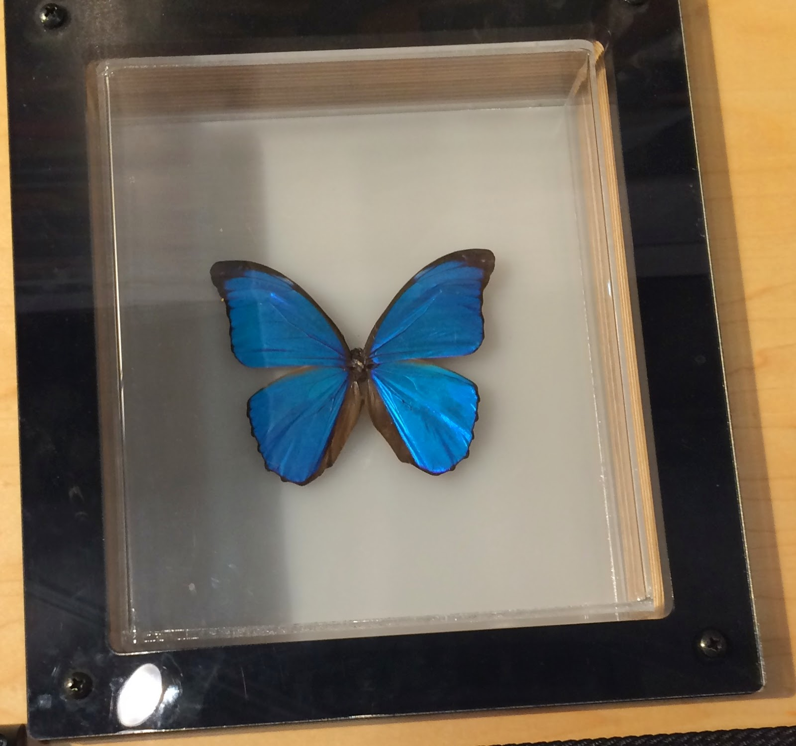 Blue Morpho Butterfly Nano Particles - no light