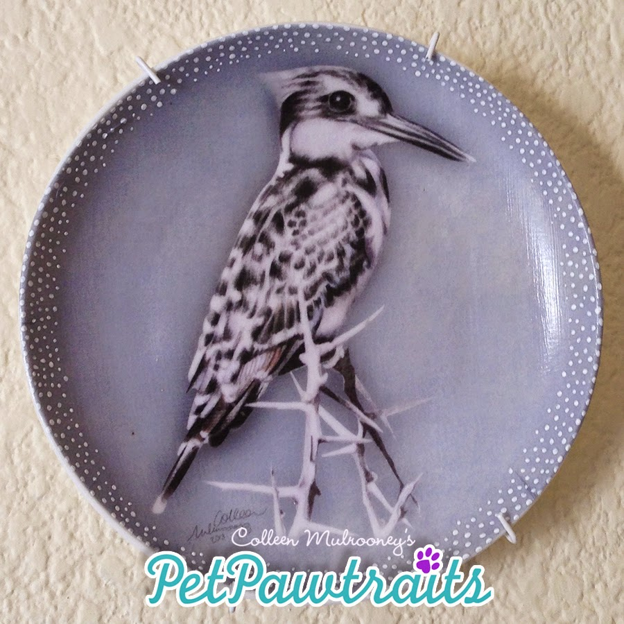 South African Birds ::Pied Kingfisher:: Coloured pencils, decoupage, hand finished