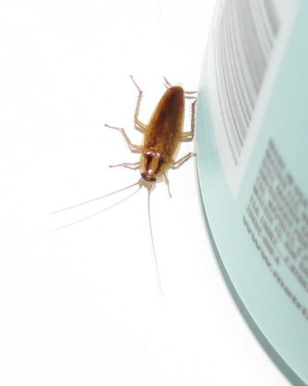 Apartment Building Has Roaches bug eric: the germans are back
