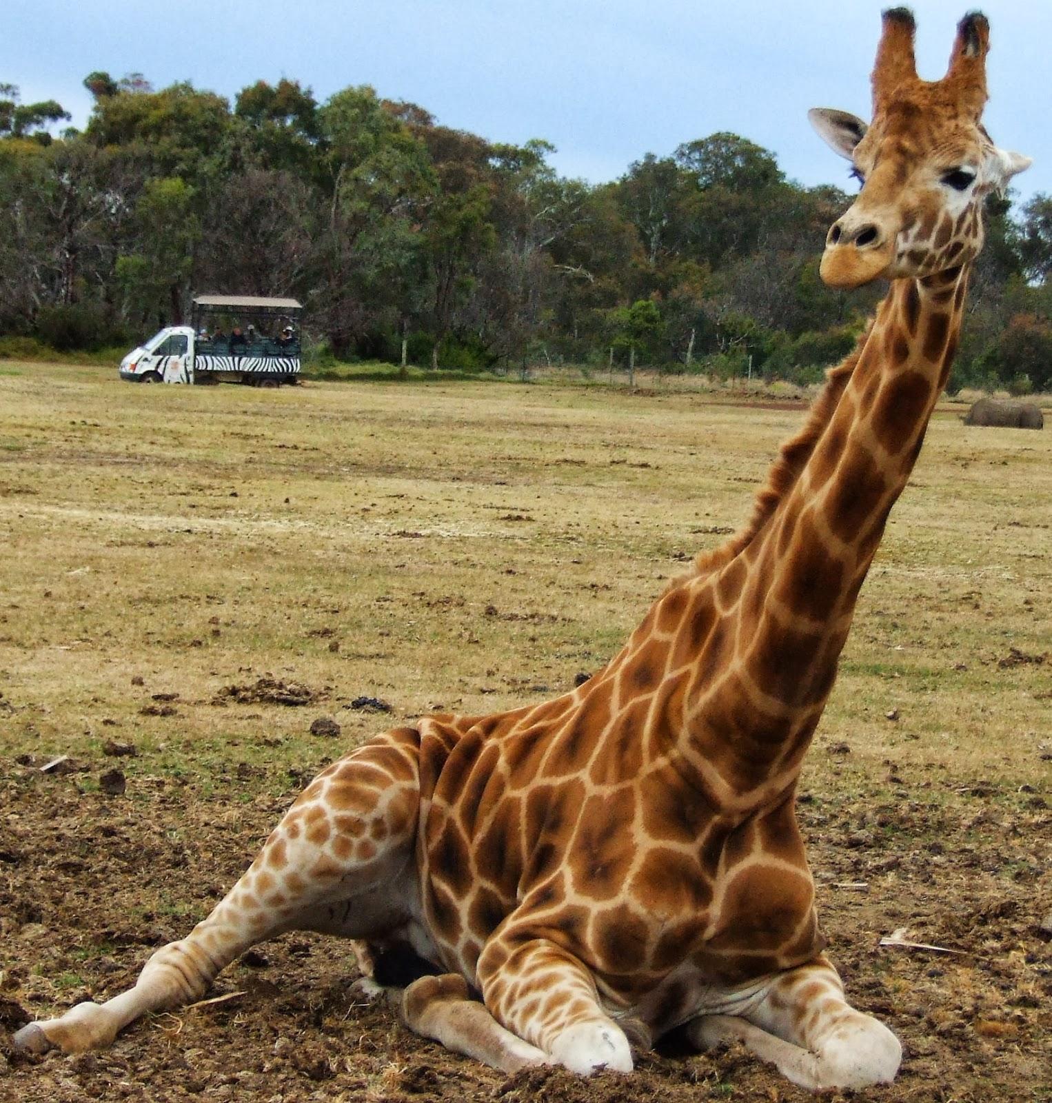 Wild Animals Information - Pictures Of Animals 2016