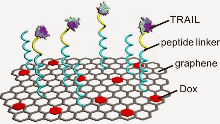 Researchers have attached two drugs -- TRAIL and Dox -- onto graphene strips. TRAIL is most effective when delivered to the external membrane of a cancer cell, while Dox is most effective when delivered to the nucleus, so the researchers designed the system to deliver the drugs sequentially, with each drug hitting a cancer cell where it will do the most damage.