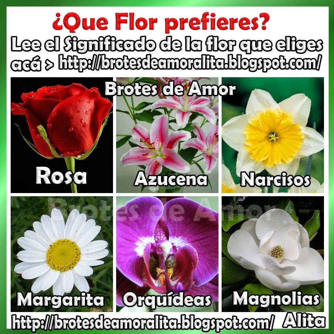 Brotes de amor 6 flores con sus significados - Significado de los colores de las rosas ...