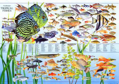 Happy fish world april 2011 for Best community fish