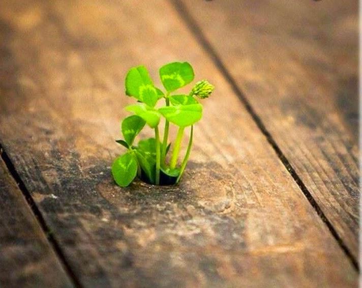 umut, ümit, yeni şeyler