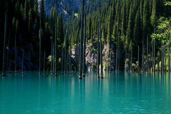 Pesona Hutan dalam Air di Berbagai Belahan Dunia