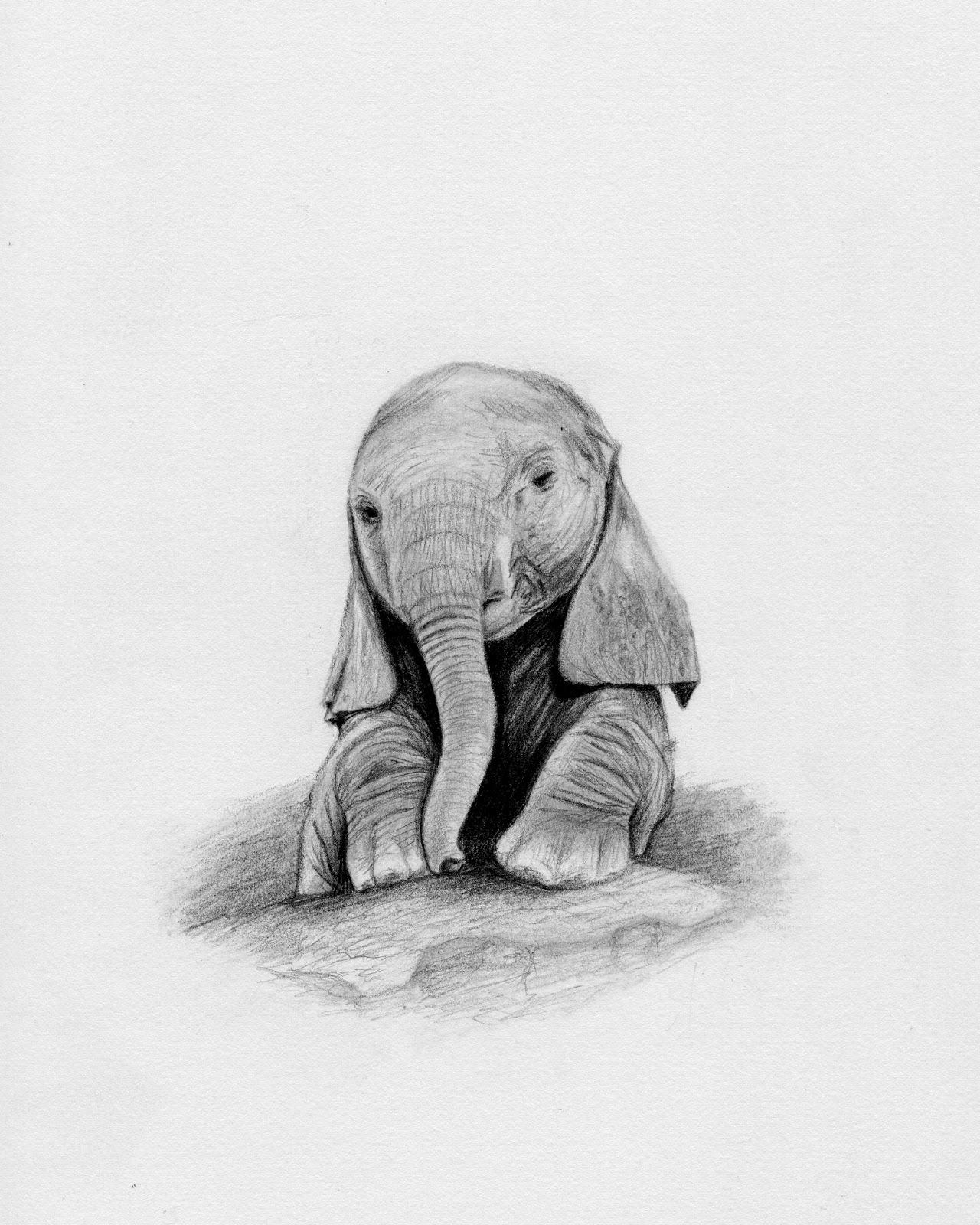 Pencil Drawings Of Elephants Tumblr Elephant Drawings In P...
