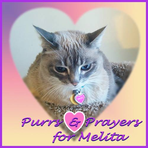 PURRS FOR MELITA