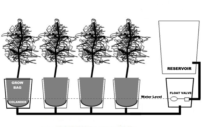 how to grow hydroponic carrots in a bucket