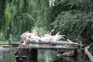 ptaki zoo w dresden