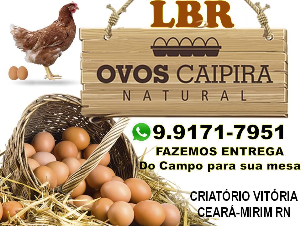 COMPRE OVOS CAIPIRA