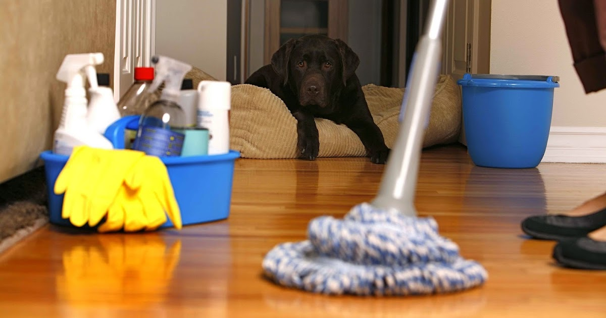 Home Pride Carpet Cleaning How Can Home Pride Carpet