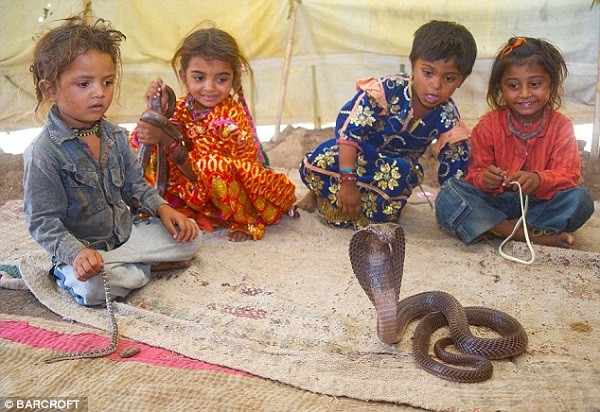 Bộ tộc thôi miên và sống chung rắn độc 7