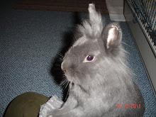 Aimee geb. 10.10.2010