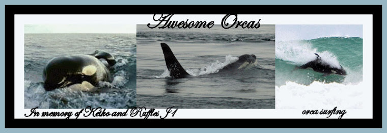 Awesome Orcas