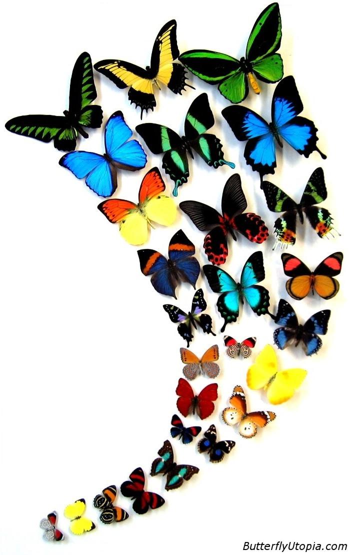 ButterflyUtopia.com - Rainbow Skies