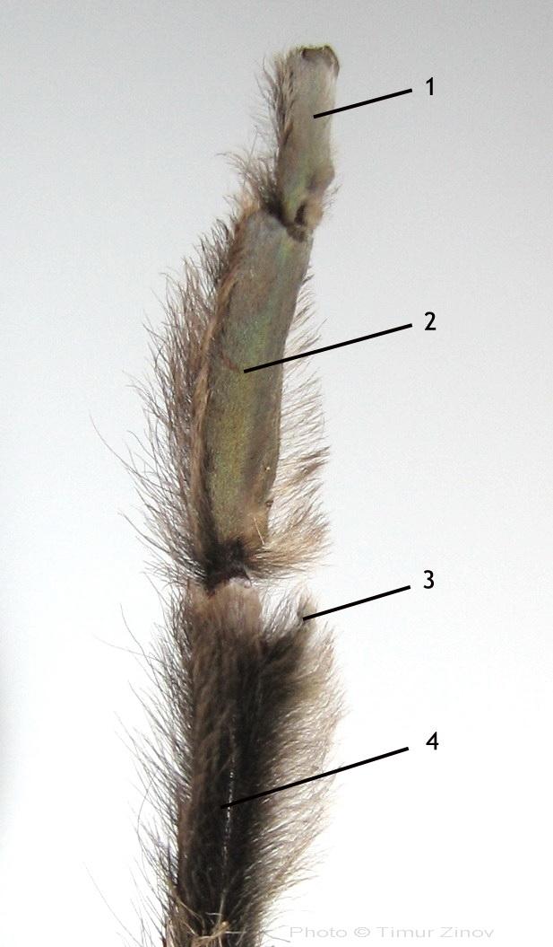 семяизвергательный канал фото