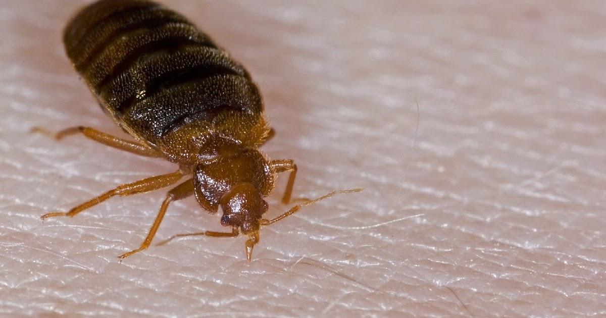 The Bed Bug Registry Toronto
