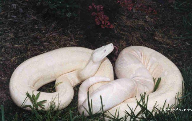Nuestra tierra, sus seres y paisajes ... ;) Animal-albino