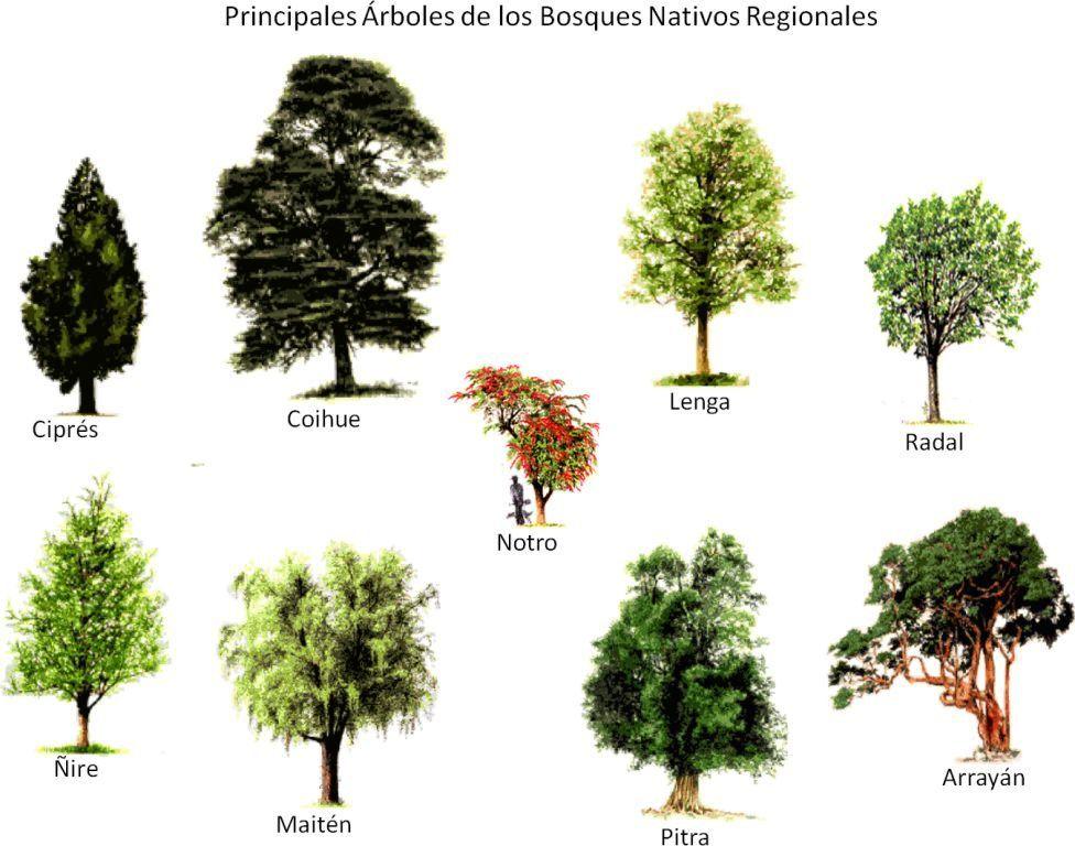 Euantártica o de los Bosques Andino Patagónicos, y es una región de