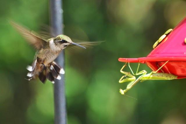flores do jardim kboing:http://letras.kboing.com.br/#!/roberto-leal/baile-dos-passarinhos/