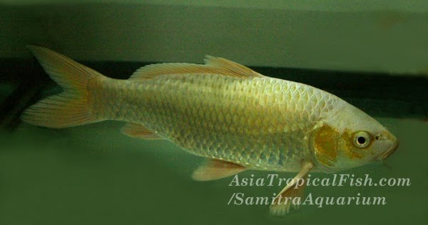 Aquarium fish store tropical fish thailand koi fish for 1 fish 2 fish store