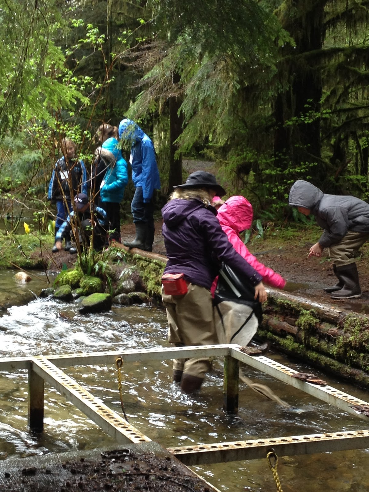 Image result for seymour river hatchery