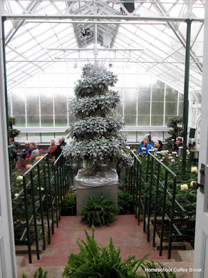 Christmas 'tree' of silver plants - A Longwood Gardens PhotoJournal, Part One on Homeschool Coffee Break @ kympossibleblog.blogspot.com
