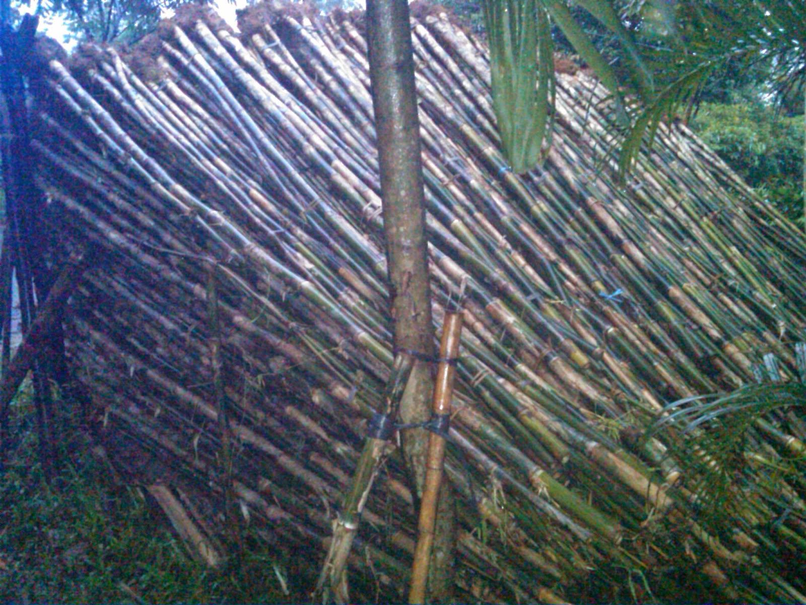 jual bambu jepang untuk pagar