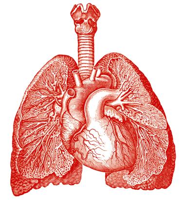 un pulmón