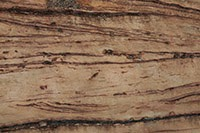 Download sedimentary rock textures