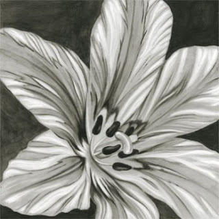 Black and White Flowers Pictures